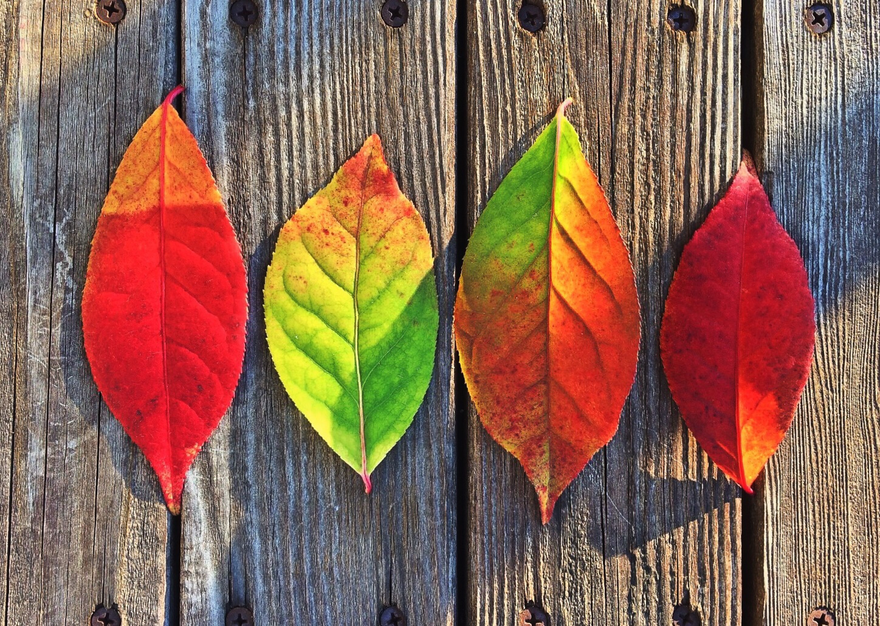 Why do leaves change different colors in the fall? -